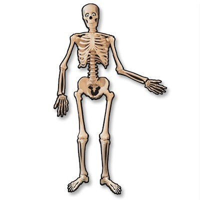 Баннер Скелет подвижный полтора метра